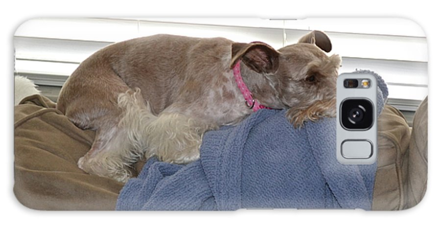 Pet Galaxy S8 Case featuring the photograph Time For A Nap by Carol Bradley