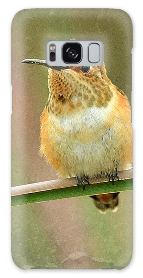 Hummingbird Galaxy S8 Case featuring the photograph Time Out by Fraida Gutovich