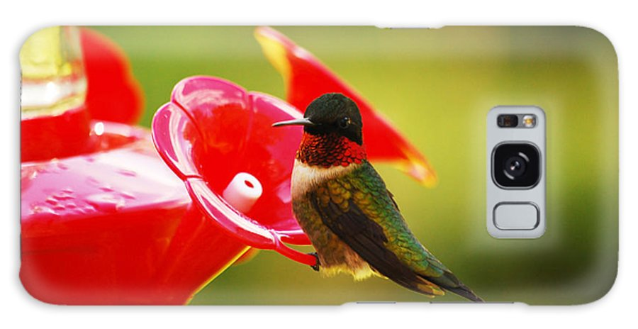 Hummingbird Galaxy S8 Case featuring the photograph Tiny Feathers by Lori Tambakis