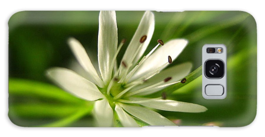 Tiny White Flower Galaxy Case featuring the photograph Tiny White Flower by Melissa Parks