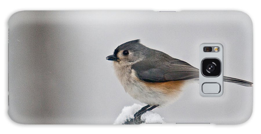 Titmouse Galaxy S8 Case featuring the photograph Titmouse Ready To Fly by Douglas Barnett