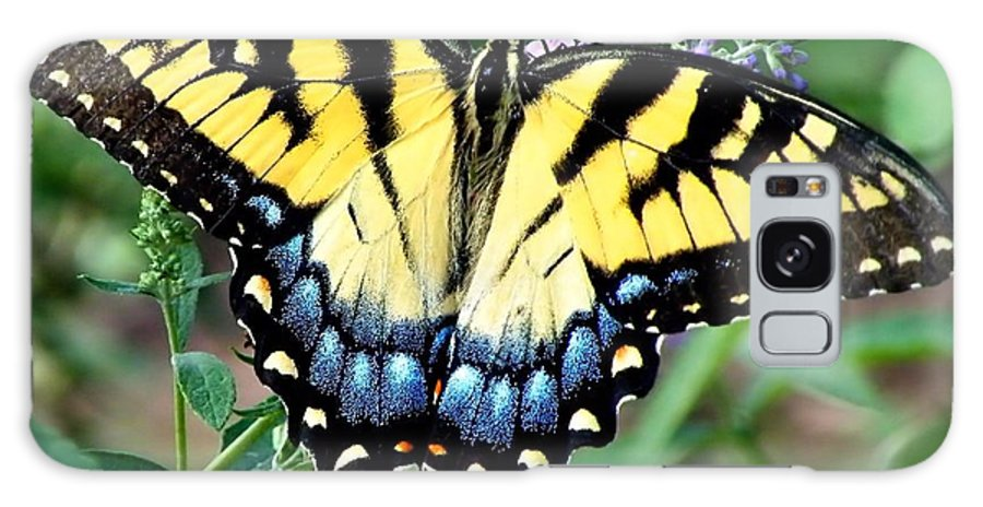 Butterfly Galaxy S8 Case featuring the photograph To Be Admired by Christy Ricafrente