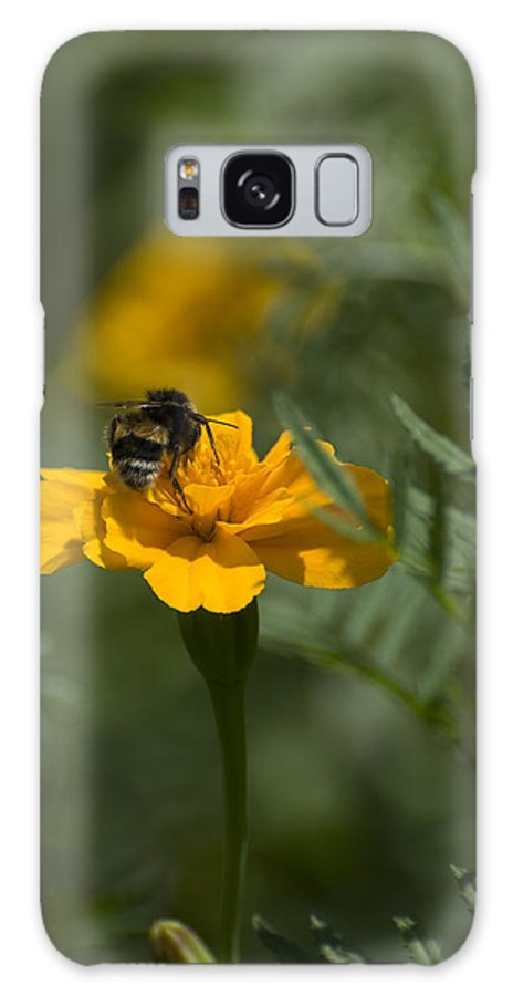 Yellow Galaxy Case featuring the photograph To Be Or Not To Bee by Adrian Bud