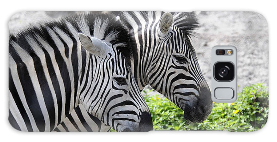 Zebra Galaxy S8 Case featuring the photograph Together by Keith Lovejoy