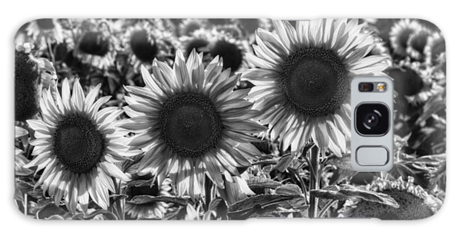 Sunflower Galaxy S8 Case featuring the photograph Tones Of Brilliance by Mark Kiver
