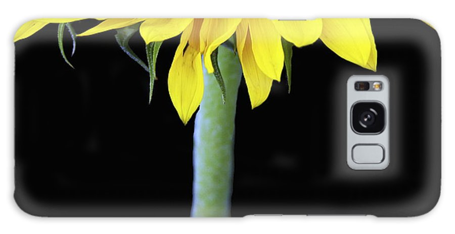 Sunflower Galaxy S8 Case featuring the photograph Topper by Rebecca Cozart