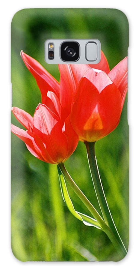 Flowers Galaxy S8 Case featuring the photograph Toronto Tulip by Steve Karol