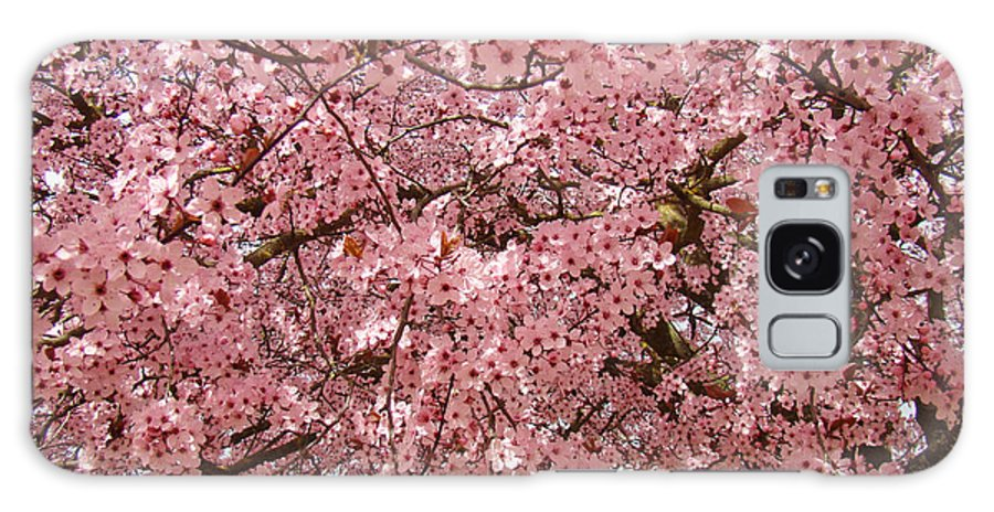 Tree Galaxy S8 Case featuring the photograph Tree Blossoms Pink Blossoms Art Prints Giclee Flower Landscape Artwork by Baslee Troutman