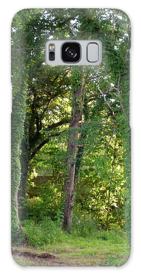 Trees Galaxy S8 Case featuring the photograph Tree Cathedral 2 by Anne Cameron Cutri