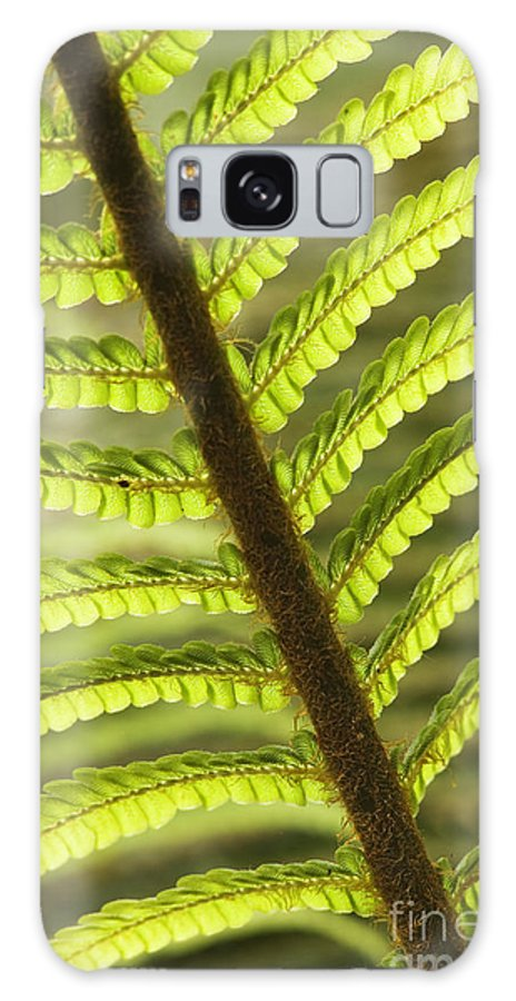 Abstract Galaxy S8 Case featuring the photograph Tree Fern Frond by Greg Vaughn - Printscapes