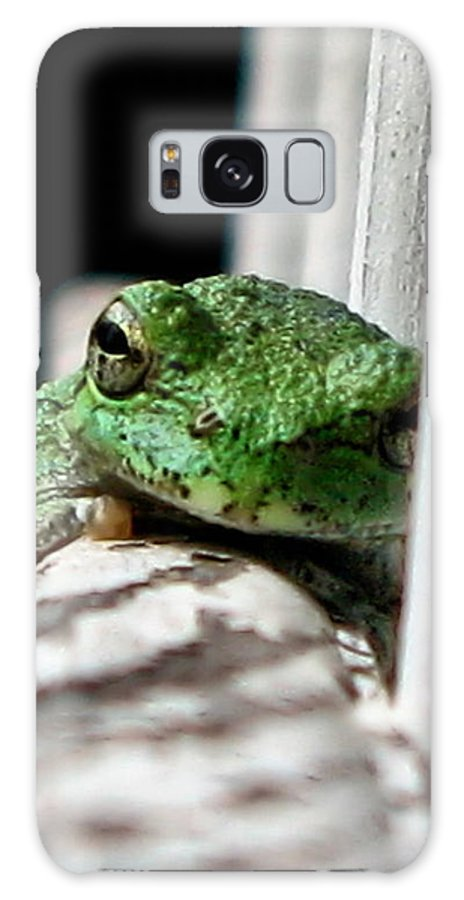 Tree Frog Galaxy S8 Case featuring the photograph Tree Frog by September Stone