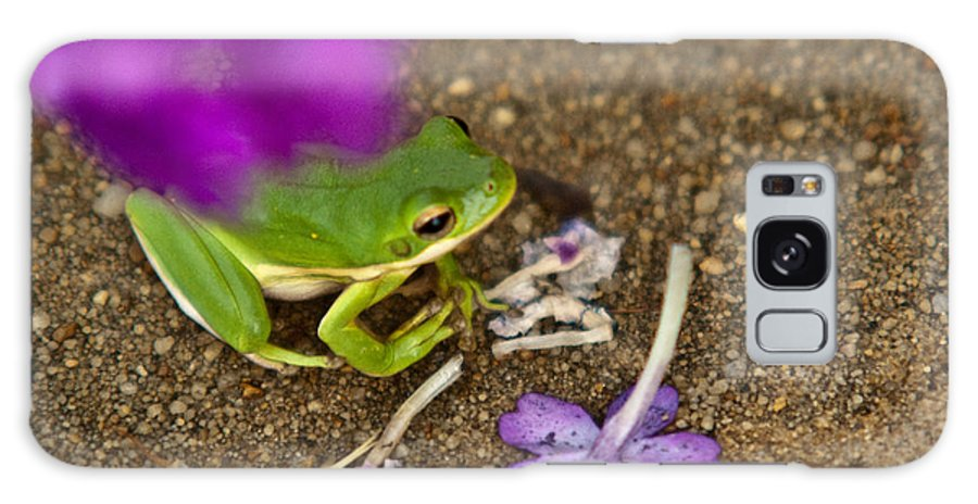 Green Galaxy S8 Case featuring the photograph Tree Frog Under Flower by Douglas Barnett