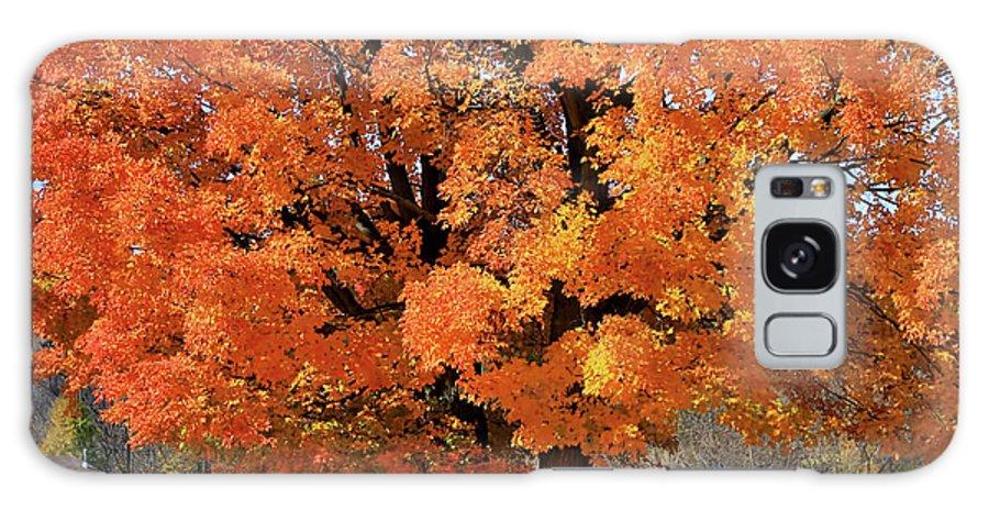 Autumn Galaxy S8 Case featuring the photograph Tree On Fire by Deborah Benoit