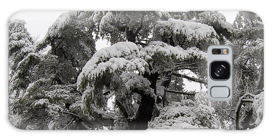 Tree Galaxy Case featuring the photograph Tree-sicle by Faith Harron Boudreau