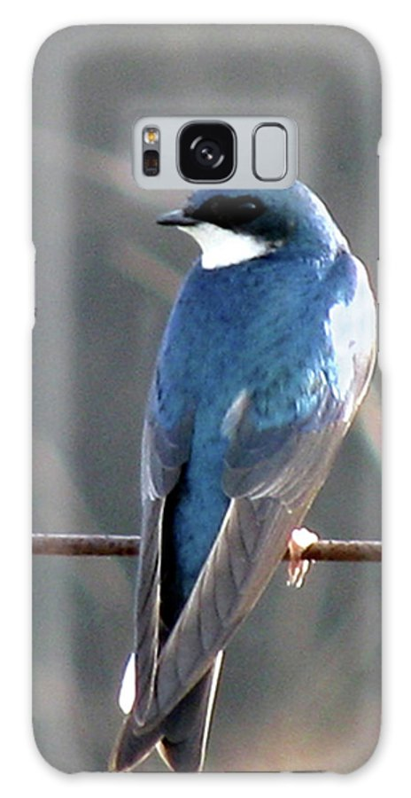 Bird Galaxy S8 Case featuring the photograph Tree Swallow by Donna Brown