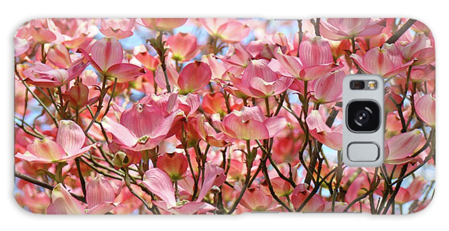 Dogwood Galaxy S8 Case featuring the photograph Trees Pink Spring Dogwood Flowers Baslee Troutman by Baslee Troutman
