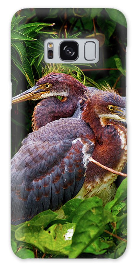 Birds Galaxy S8 Case featuring the photograph Tricolored Siblings by Christopher Holmes