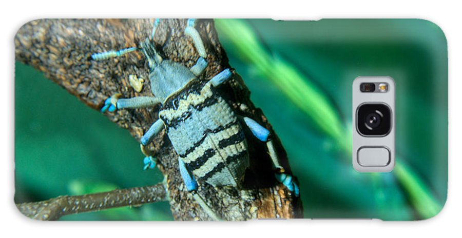 Blue Galaxy Case featuring the photograph Tropical Blue Weevil by Douglas Barnett
