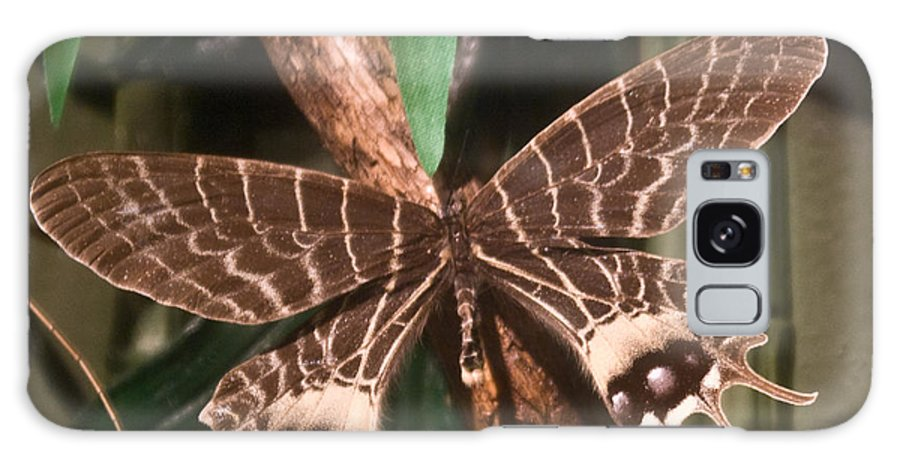 Butterfly Galaxy S8 Case featuring the photograph Tropical Butterfly by Douglas Barnett