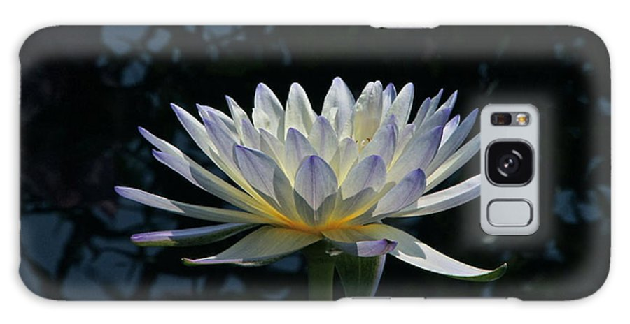 Waterlily Galaxy S8 Case featuring the photograph Tropical Glow by Byron Varvarigos