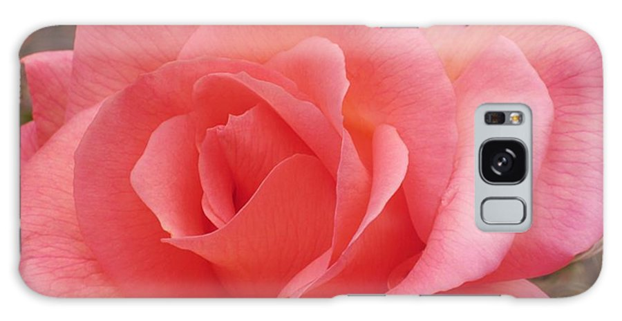 Rose Galaxy S8 Case featuring the photograph Truly Pink by JAMART Photography