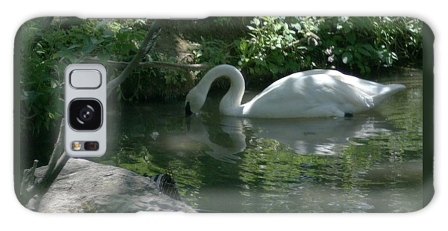 Trumpeter Swan Galaxy S8 Case featuring the photograph Trumpeter Swan by Dawn Downour