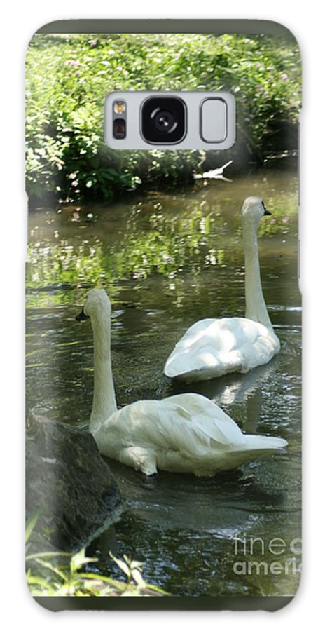 Water Galaxy S8 Case featuring the photograph Trumpeter Swans by Dawn Downour