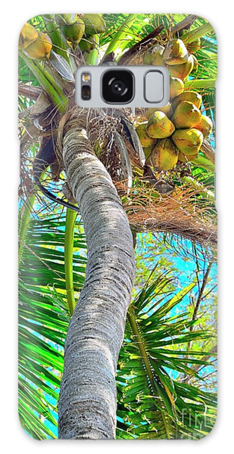 Coconut Palm Tree Galaxy S8 Case featuring the photograph Trunk Show by Alison Belsan Horton