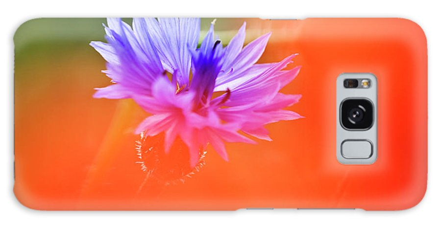 Cornflower Galaxy S8 Case featuring the photograph Tucked Away 2 by Heiko Koehrer-Wagner