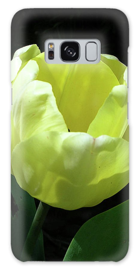 Flowers Galaxy S8 Case featuring the photograph Tulip 0755 by Guy Whiteley