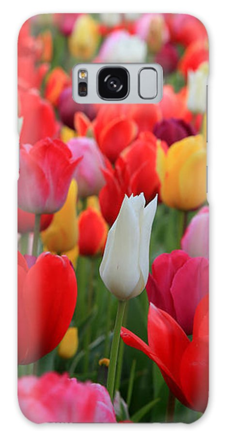 Tulips Galaxy S8 Case featuring the photograph Tulip Color Mix by Peter Simmons
