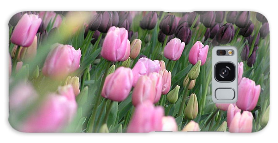 Tulips Galaxy Case featuring the photograph Tulip Dreams by Louise Magno