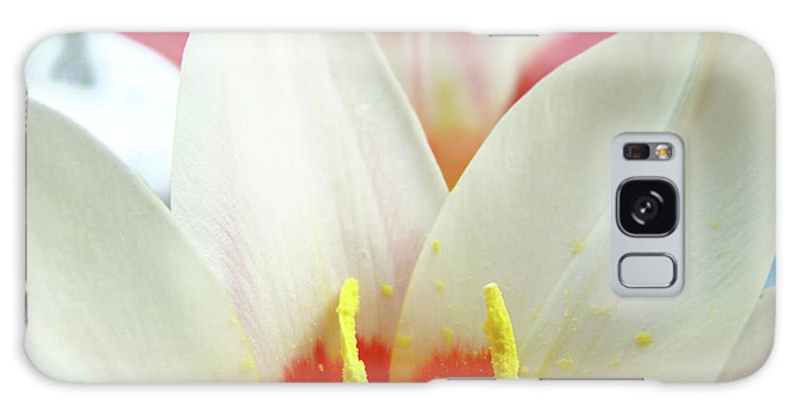 �tulips Artwork� Galaxy S8 Case featuring the photograph Tulip Flowers Art Prints 4 Spring White Tulip Flower Macro Floral Art Nature by Baslee Troutman