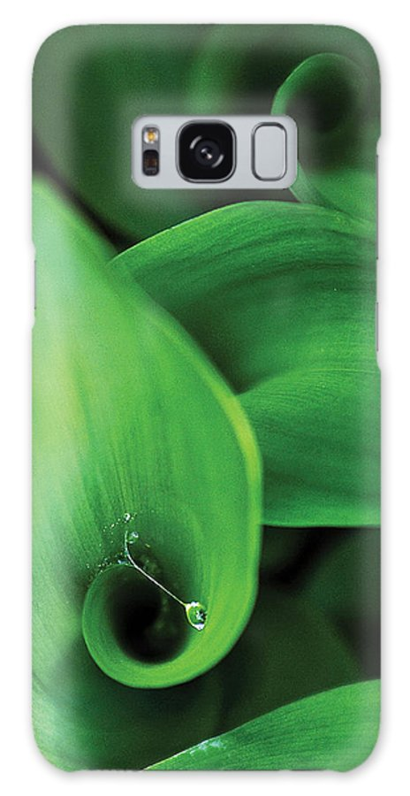 Nature Galaxy Case featuring the photograph Tulip Leaves-1 by Steve Somerville