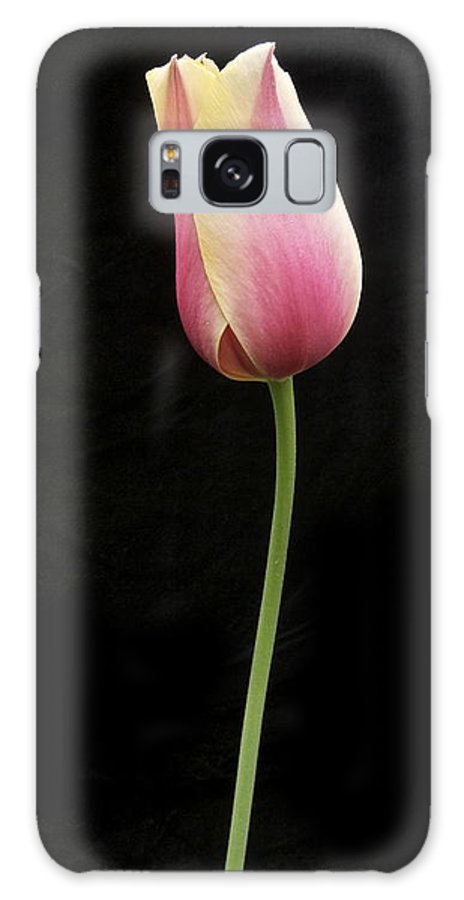 Tulip Galaxy S8 Case featuring the photograph Tulip Standing Tall by Michael Peychich