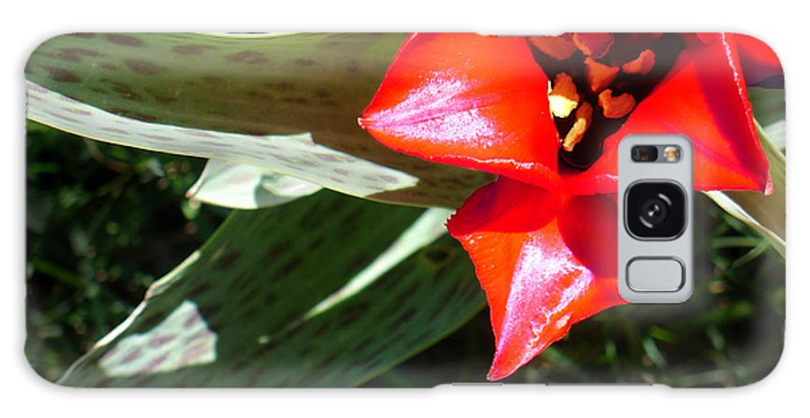 Tulip Galaxy S8 Case featuring the photograph Tulip by Steve Karol