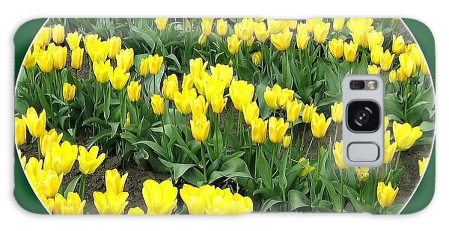 Agriculture Galaxy S8 Case featuring the photograph Tulip Town 2 by Will Borden
