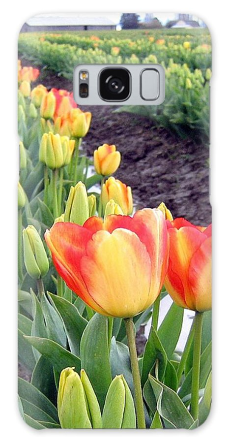 Agriculture Galaxy S8 Case featuring the photograph Tulip Town 6 by Will Borden