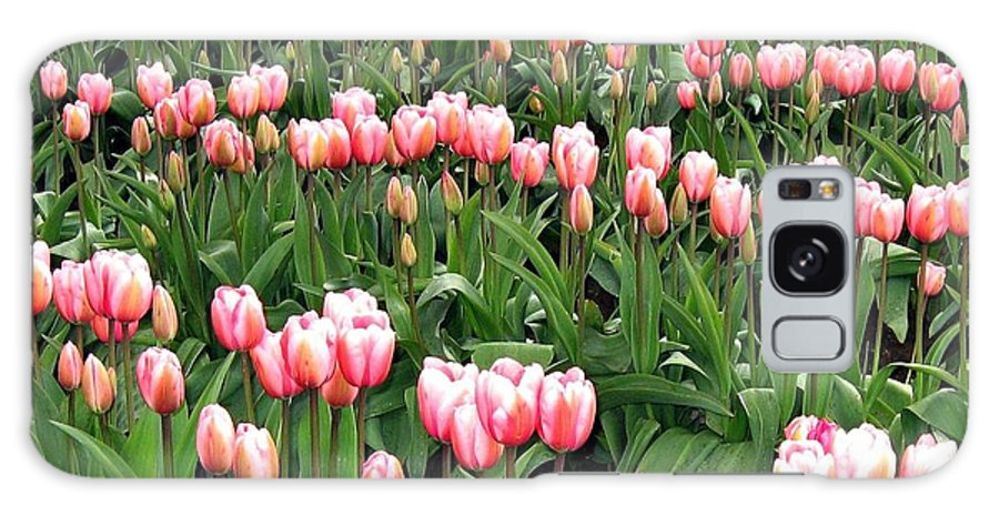Agriculture Galaxy S8 Case featuring the photograph Tulip Town 8 by Will Borden