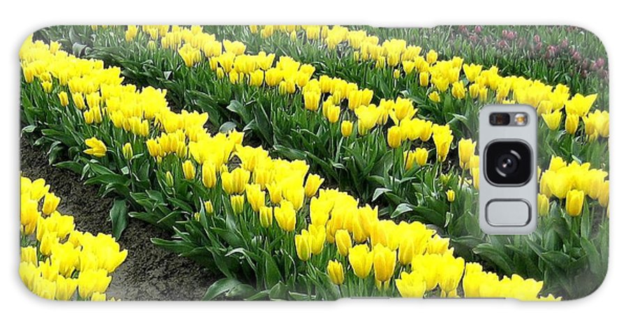 Agriculture Galaxy S8 Case featuring the photograph Tulip Town 9 by Will Borden