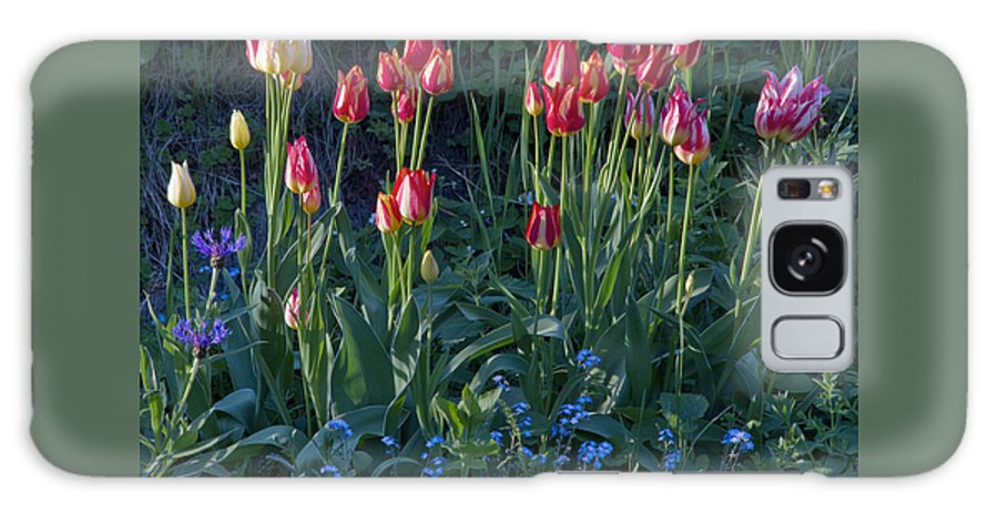 Tulips Galaxy S8 Case featuring the photograph Tulips In Sunshine by Lise-Lotte Larsson