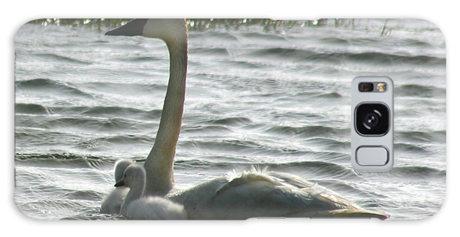Swans Galaxy S8 Case featuring the photograph Tundra Swan And Signets by Anthony Jones