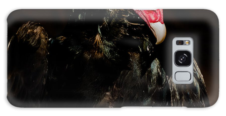 Animals Galaxy S8 Case featuring the photograph Turkey Vulture by Yeates Photography