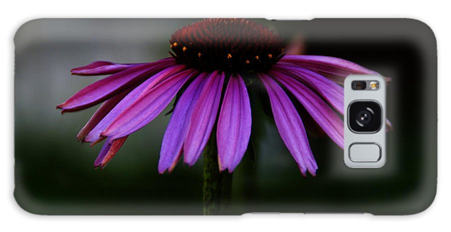 Coneflower Galaxy S8 Case featuring the photograph Twilight by Linda Shafer