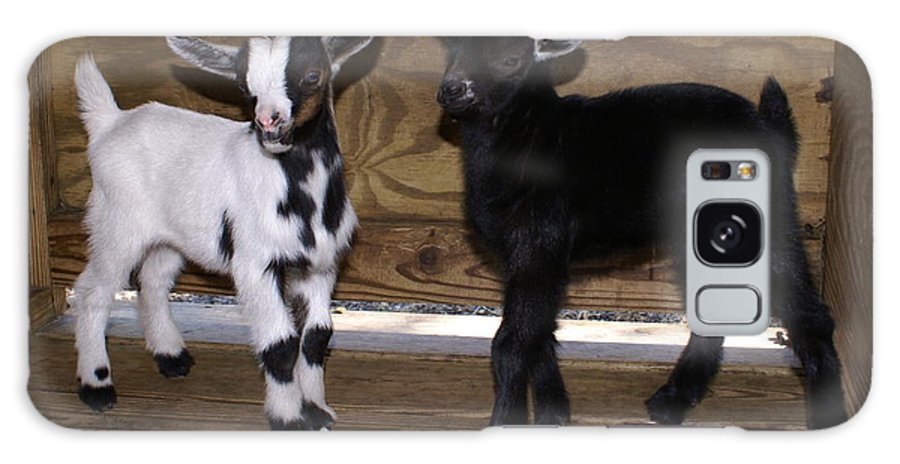 Baby Goat Twins Galaxy S8 Case featuring the photograph Twin Kids by Debbie May