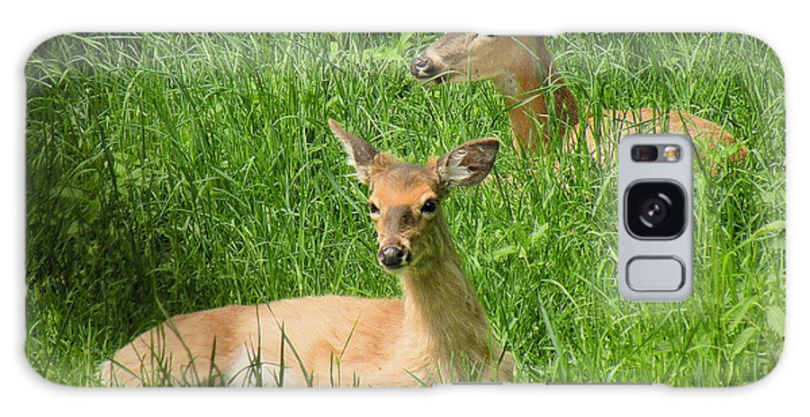 Deer Galaxy S8 Case featuring the photograph Two Deer In Tall Grass by Rosalie Scanlon
