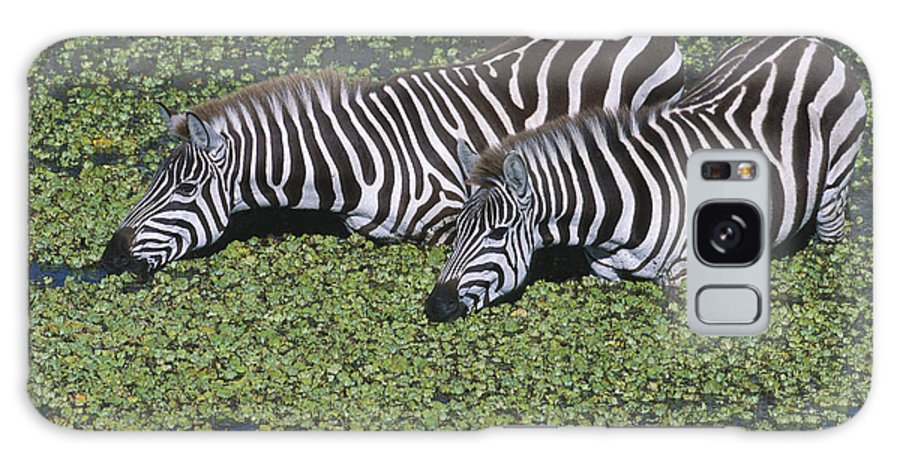 Zebra Galaxy S8 Case featuring the photograph Two For Lunch by Sandra Bronstein