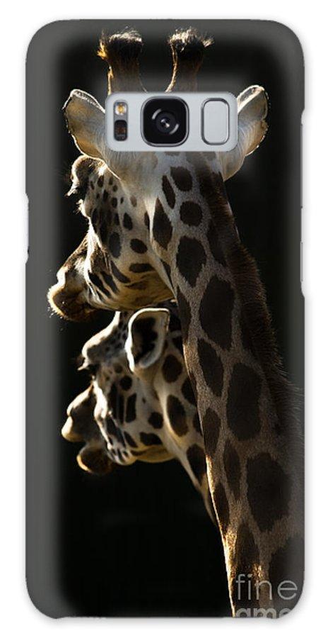 Giraffe Galaxy S8 Case featuring the photograph Two Headed Giraffe by Angel Ciesniarska