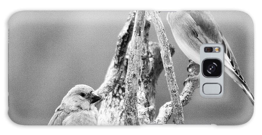 Birds Galaxy S8 Case featuring the photograph Two Little Birds by Angel Ciesniarska