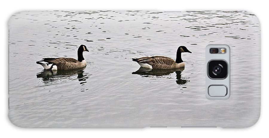 Arkansas Galaxy S8 Case featuring the photograph Two Lovely Canadian Geese by Douglas Barnett